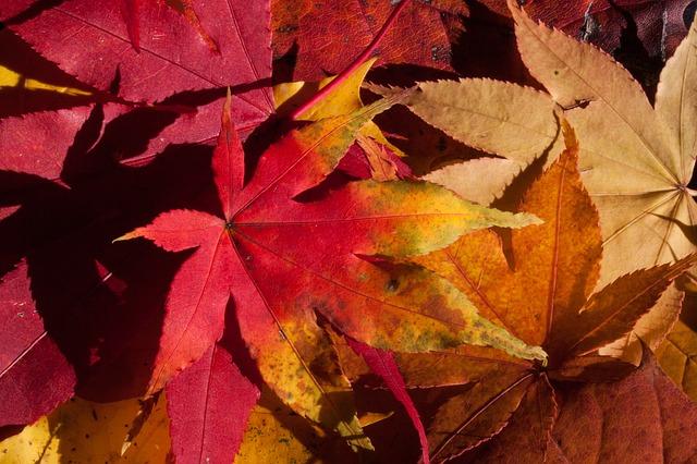autumn-200293_640